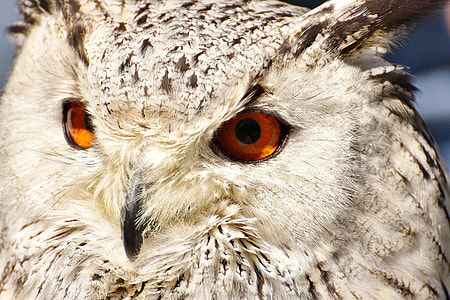 macro photography of gray owl