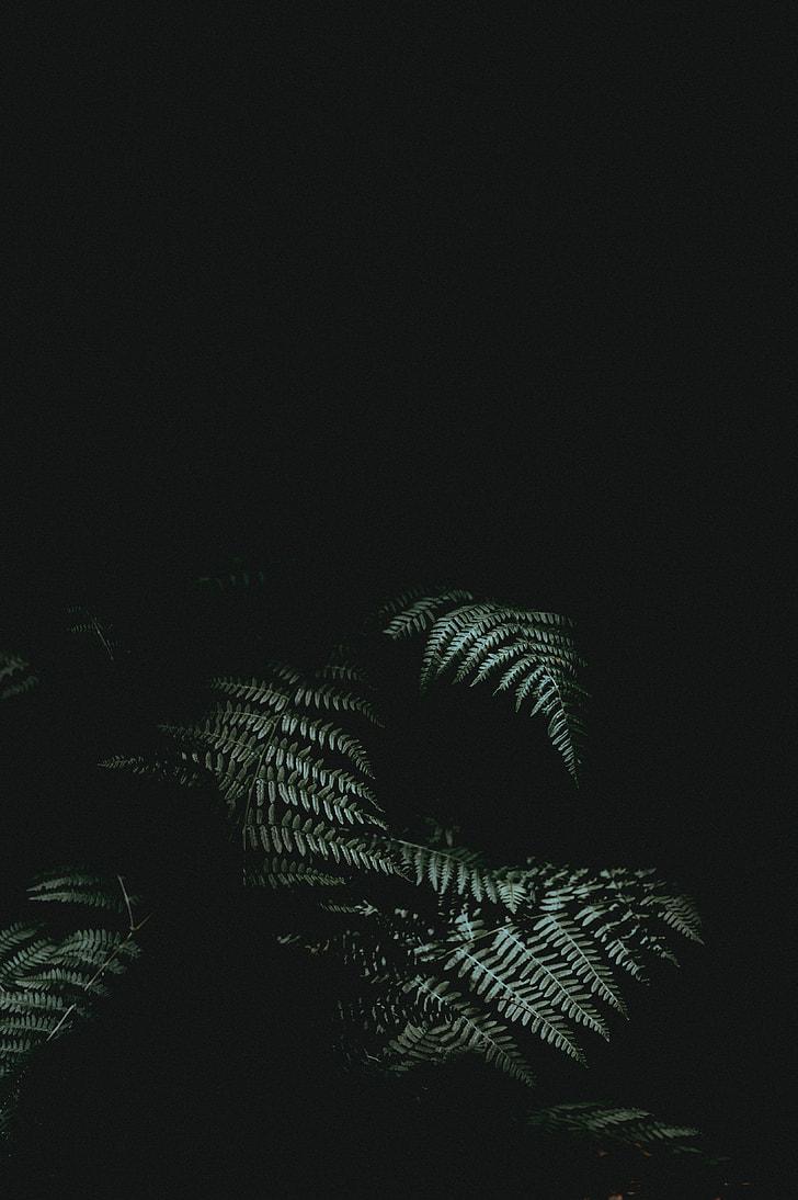 backgrounds, black Color, nature, dark
