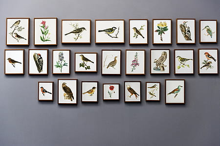 assorted birds paintings with black wooden frames