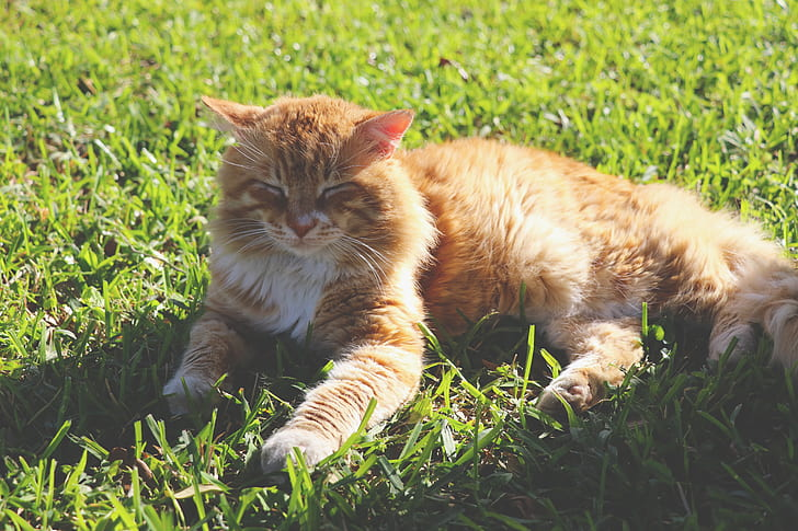 cat, grass, wild cat, feline, pet, animal