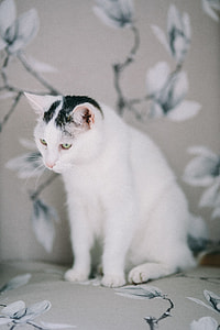 Portraits of white sad cat