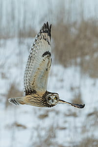 white and black owl flying