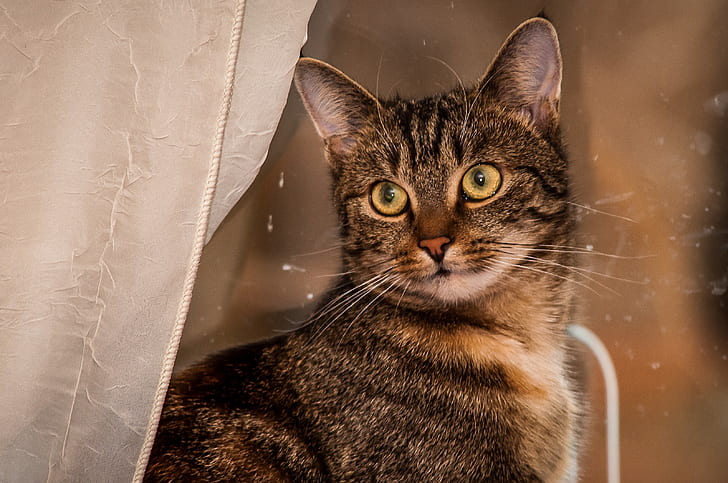 selective focus photography of grey tabby cat
