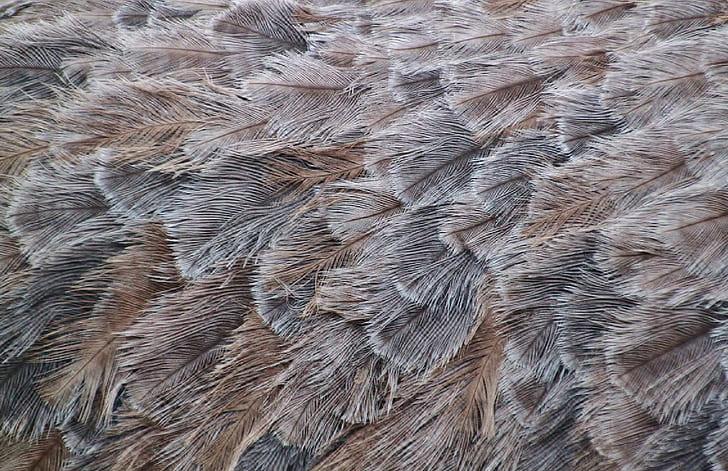 feather, bird, animal, plumage, fauna, close