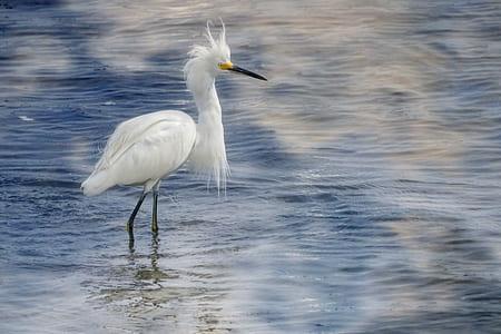 crane bird in body of water