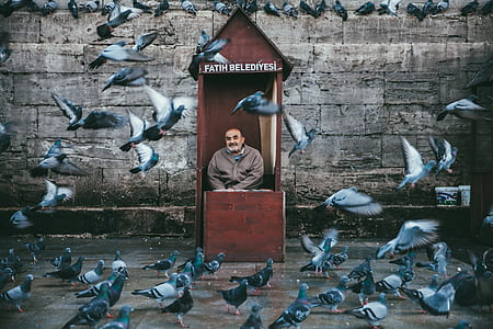 man in brown booth near flock of white-and-gray pigeons photograph