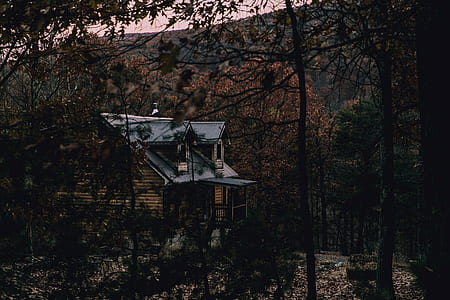blue and brown cabin in middle of forest
