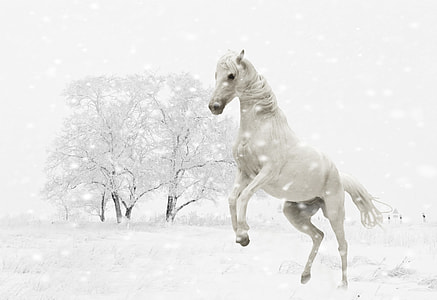 rearing white horse with white bare tree background