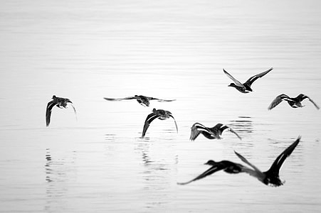 flock of birds flying over body of watr