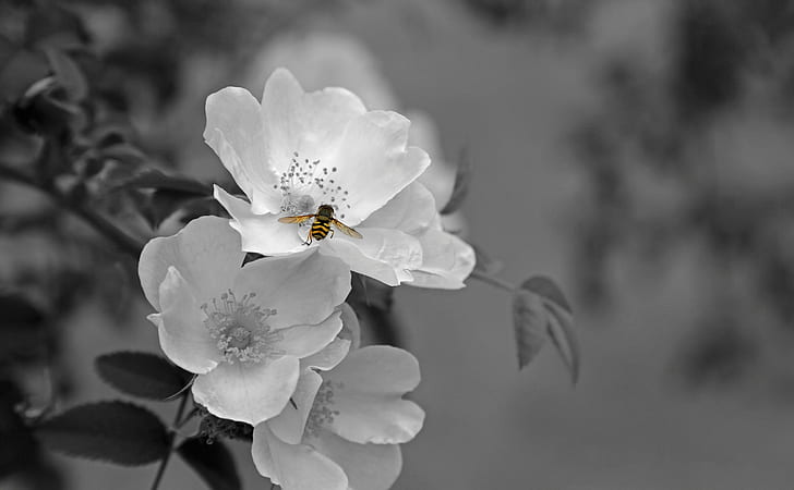 Selective Color Photography Of Clustered White Flowers