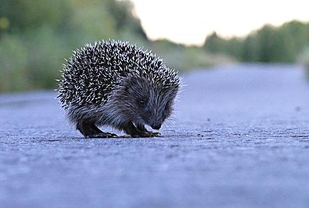 brown hedgehog on concrete road