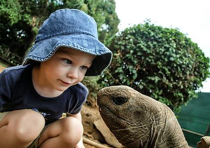 photo of girl looking on tortoise head