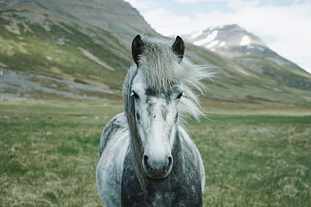 white and black horse on field with with mountain in background
