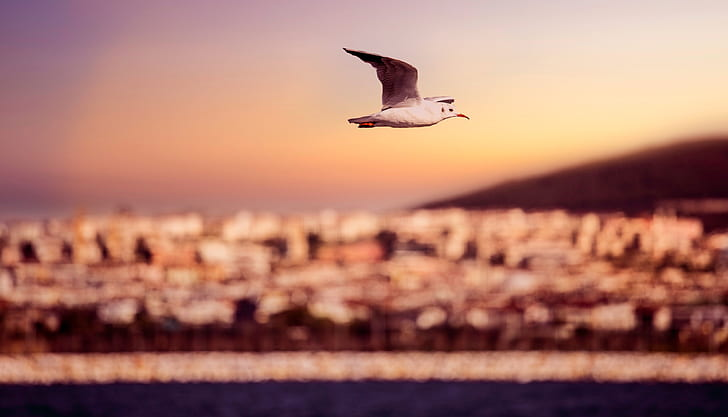 white and brown seagull