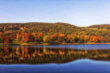 green leaf tree near lake