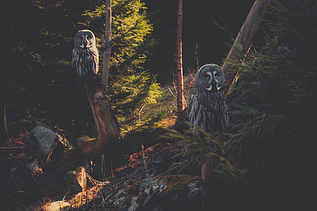 two gray-and-white owls on tree branch near trees
