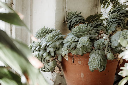 close-up photography of green succulent plants