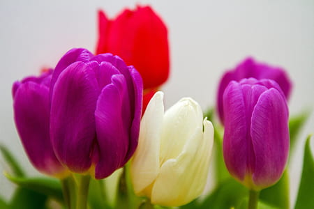 selective photography of purple and white petaled flowers