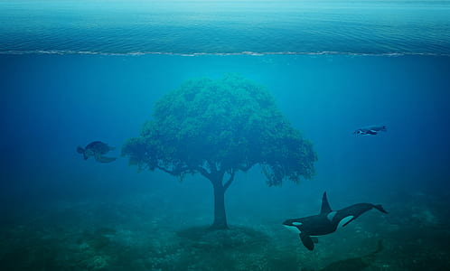 tree between two killer whales and one turtle underwater