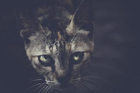 Black Cat Dark