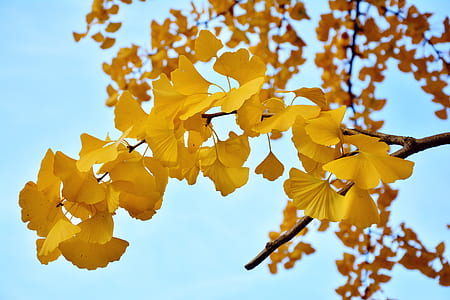 yellow leaf tree