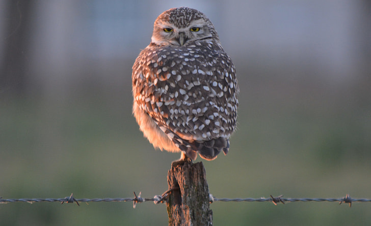 selective focus photography of gray and white owl