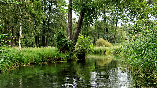 body of water surrounded by trees and grass