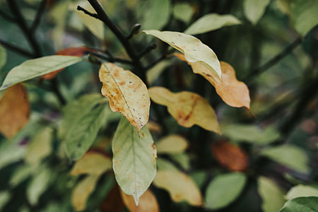 Close-ups of leaves on trees