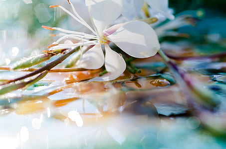 closeup photography of white gaura flower with water droplets