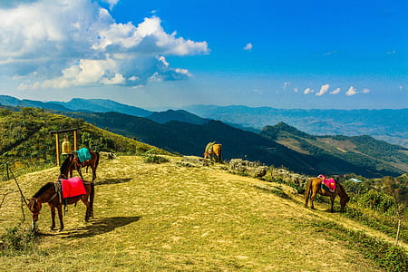 Four Brown Horses in Mountain Under Blue Skies