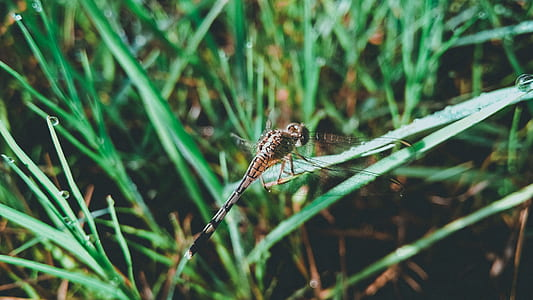 Dragonfly on Grass Leaf