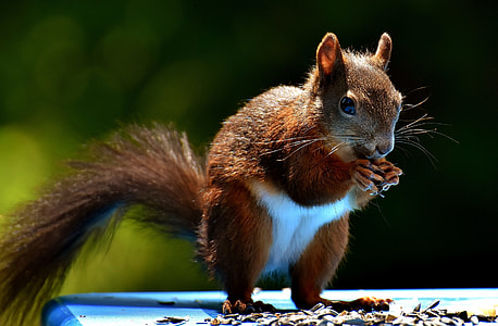 brown and white squirrel eating nut selective-focus photo