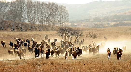 herd of horse on brown grass field near trees