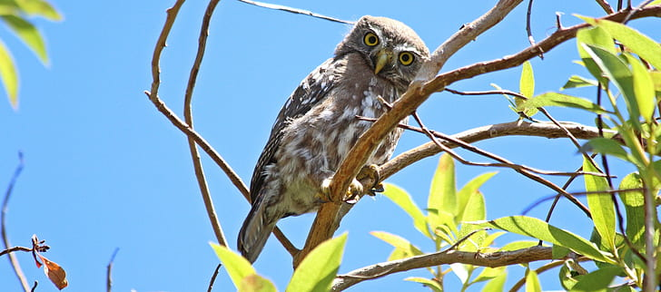 brown and white owl perched on tree