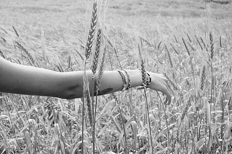 woman arm on wheat field