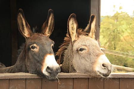 black and gray donkeys