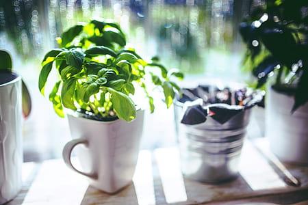 white ceramic mug and green leafed plant