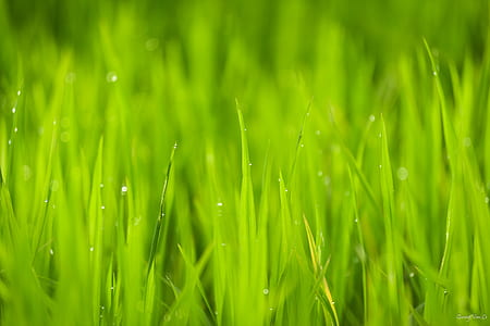 green grass photography during daytime