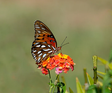 photography of butterfly on top of yellow and orange flower