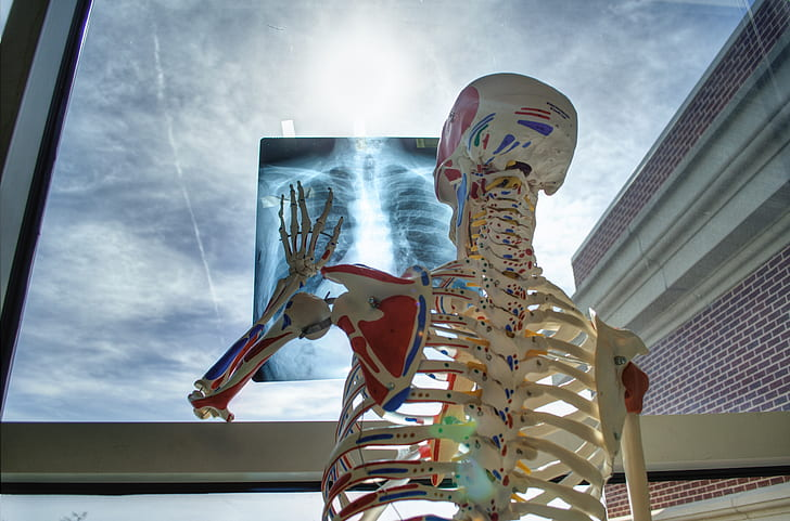 human skeleton holding x-ray paper