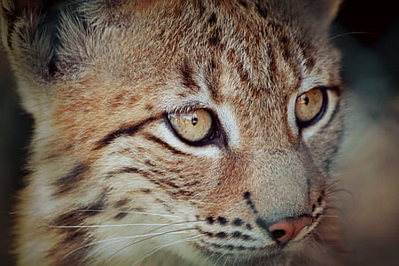 macro photography of brown cat