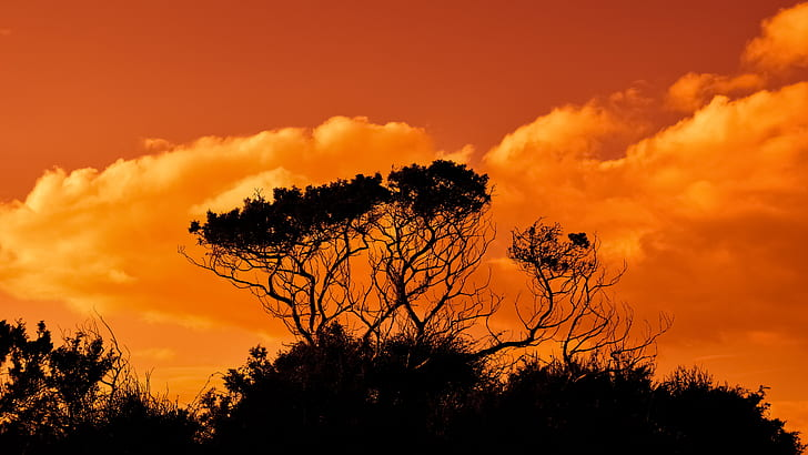 silhouette of trees during golden hour