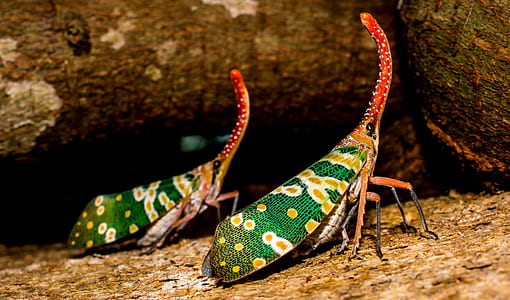 green, orange, and red beetle with long nose