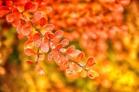 orange leaves selective-focus photo