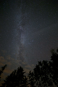 star above tall trees