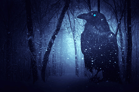 photo of black crow surrounded by snow