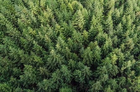 high-angle view of pine trees