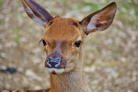 photo of Roe deer