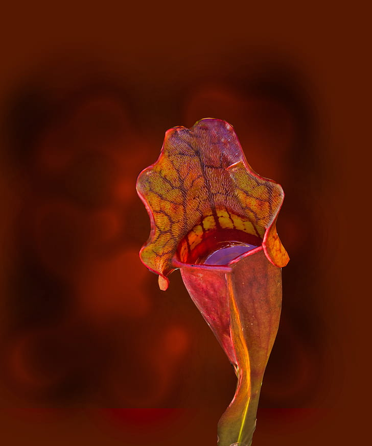 Yellow and Red Flower Bud