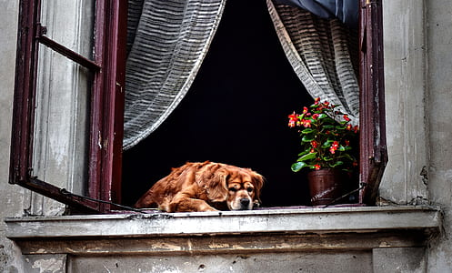 dog lying on window